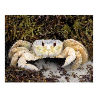 Crab on Beach Postcard