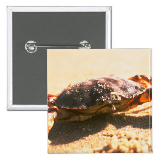 Crab on The Beach Photograph Pinback Button