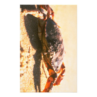 Crab on The Beach Photograph Stationery Design