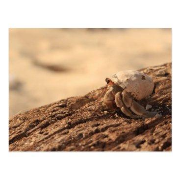 Beach Themed Crab on the beach postcard