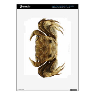 Crab on white background iPad 3 decal