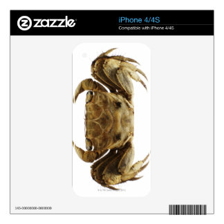 Crab on white background iPhone 4 decal
