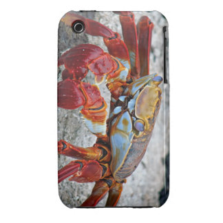 Crab photo iPhone 3 cover