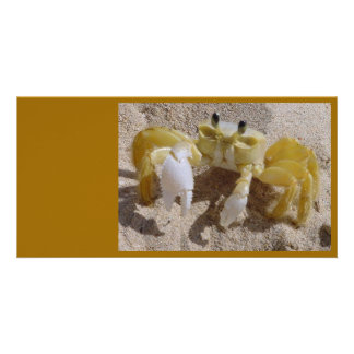 Crab Photography Picture Card
