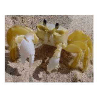 Crab Photography Postcard