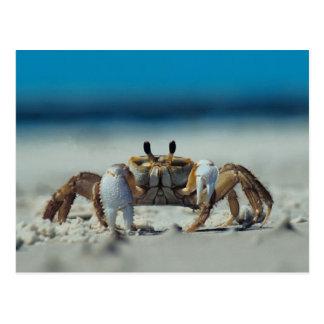 Crab Post Card