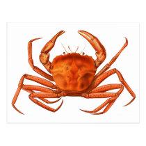 Crab Postcard - Antique Scientific Illustration