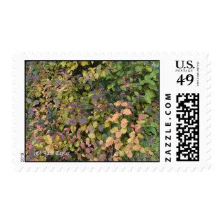 Crabapple 03 postage stamp