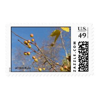 Crabapple 05 postage stamp