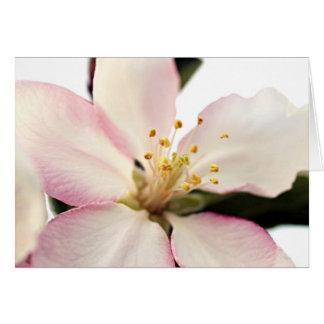 Crabapple Blossom Card