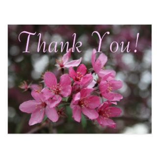 CrabApple Blossom Thank You Postcard
