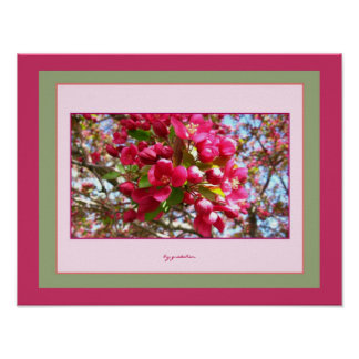 Crabapple Blossoms 2 Photo Poster by gretchen