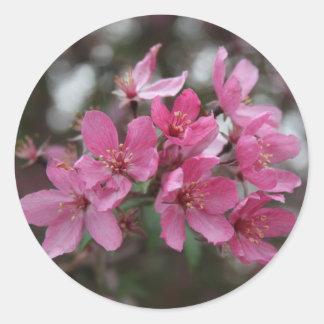 CrabApple Blossoms Classic Round Sticker
