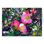 Crabapple en tarjeta de la floración