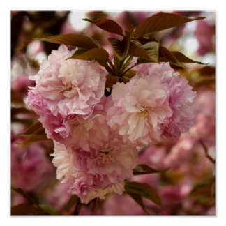 Crabapple florece poster
