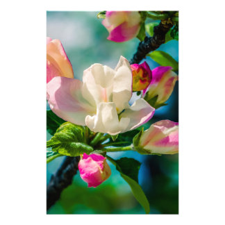 Crabapple flower and buds flyer
