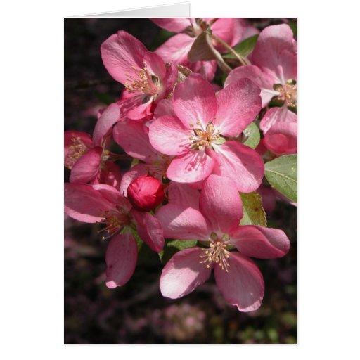 Crabapple rosado felicitacion