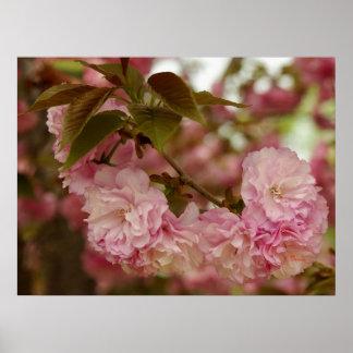 Crabapple rosado florece poster