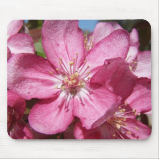Crabapple Tree's Blooms Mouse Pad