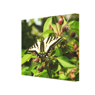 Crabapples and Butterfly Canvas Print