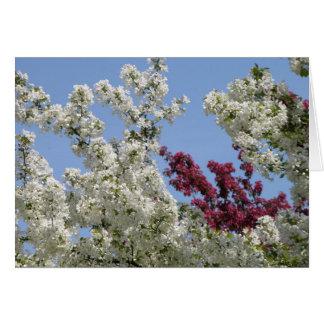 Crabapples in the Arboretum Greeting Card
