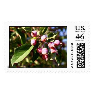 Crabapples Stamp