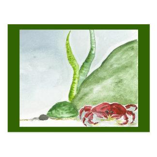 Crabby Corner Post Card