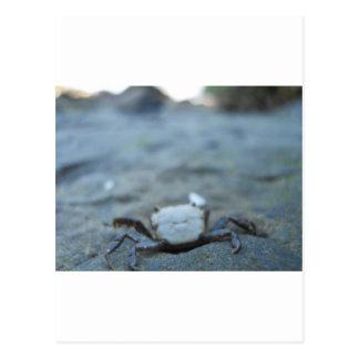 Crabby Smile Postcard