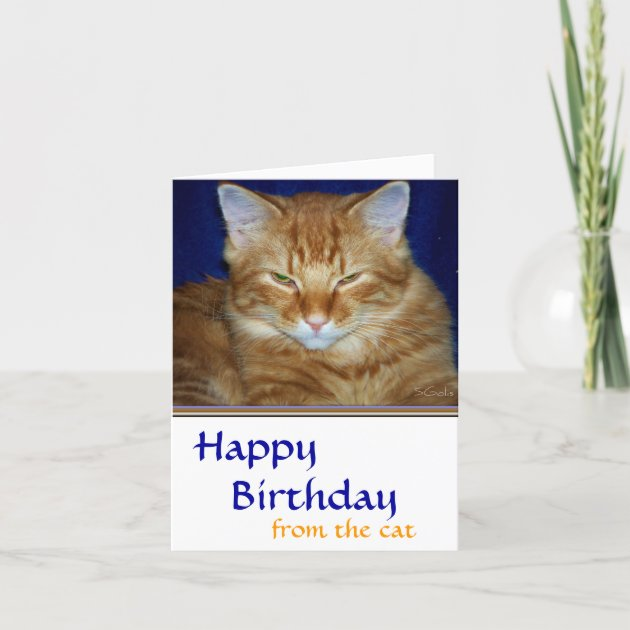Cranky Birthday Cat Card Collection