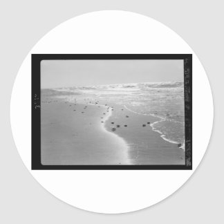 Crabs on the beach. At Wadi Ghuzze 1920-1933.tif Classic Round Sticker