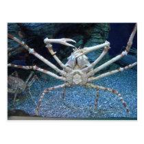 Crabs Postcard