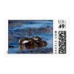 "crabs ""Yamatoosagani"" Postage Stamps"