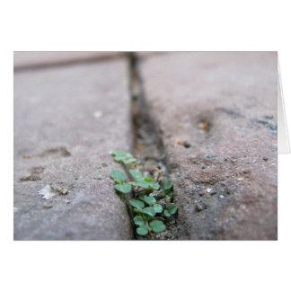 Crack Ivy by Richard Dodd Card