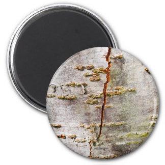 Cracked Birch Bark 2 Inch Round Magnet