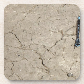 cracked insect coaster