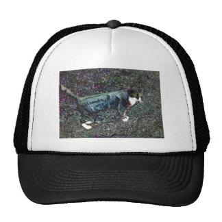 Crackers the Cat Trucker Hat