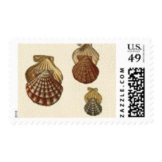 Crackled Antique Shells Postage