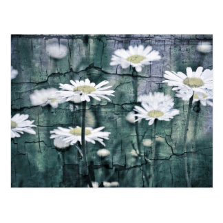 Crackled Daisies Postcard
