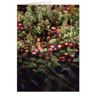 Cranberry Bog Card
