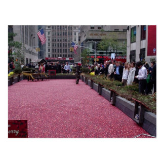 cranberry bog in the middle of NYC Postcard