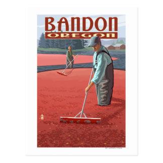 Cranberry Bogs Harvest - Bandon Oregon Postcard