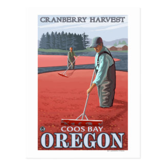Cranberry Bogs Harvest - Coos Bay, Oregon Postcard