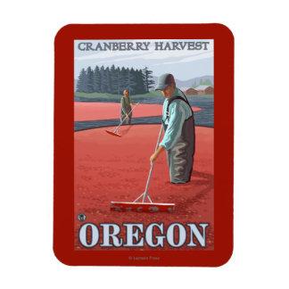 Cranberry Bogs Harvest Vintage Travel Poster Magnet