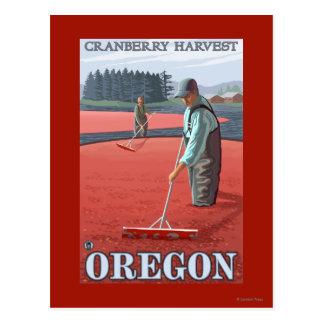 Cranberry Bogs Harvest Vintage Travel Poster Postcard