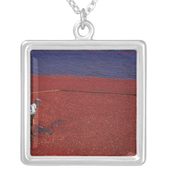 Cranberry Harvest, Middleboro, MA, USA Silver Plated Necklace