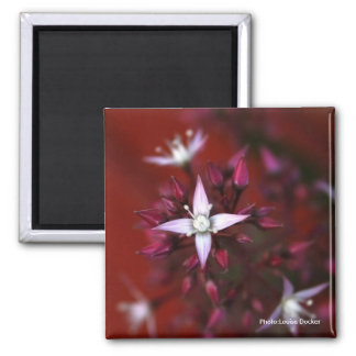 Cranberry Red and White Flower Magnet