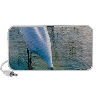Crane feeding in shallow water travel speaker