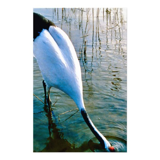 Crane feeding in shallow water stationery design