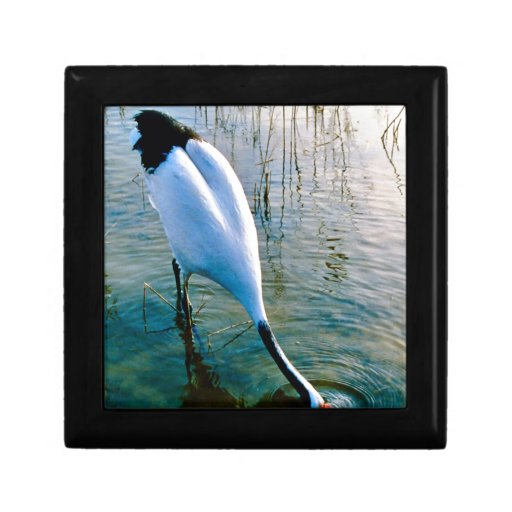 Crane feeding in shallow water trinket boxes