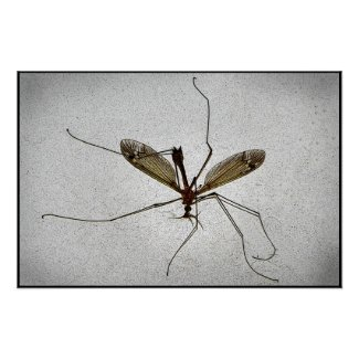 Crane Fly Posters